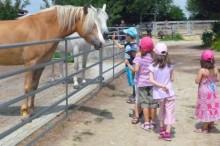 Kindergarten Garching uebrgang Pferdehof streicheln
