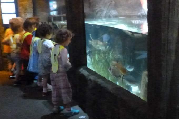 Kindergarten Garching Meer Sealife Aquariumfische
