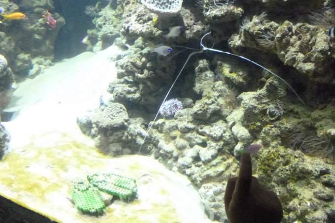 Kindergarten Garching Meer Sealife Riff