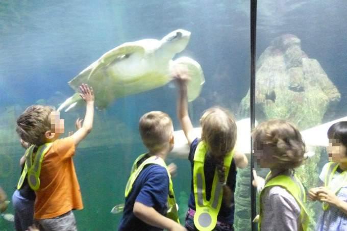Kindergarten Garching Meer Sealife Schildkröte
