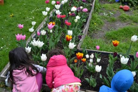 Kinderkrippe Kindergarten Garching Tulpe Pflanzen