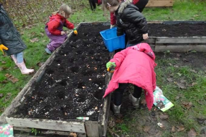 Kinderkrippe Kindergarten Garching Tulpen pflanzen