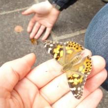 Kita Laim Schmetterling Nimmersatt