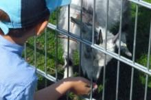 Kindergarten Garching uebrgang Pferdehof streichelng pferdehof fuettern